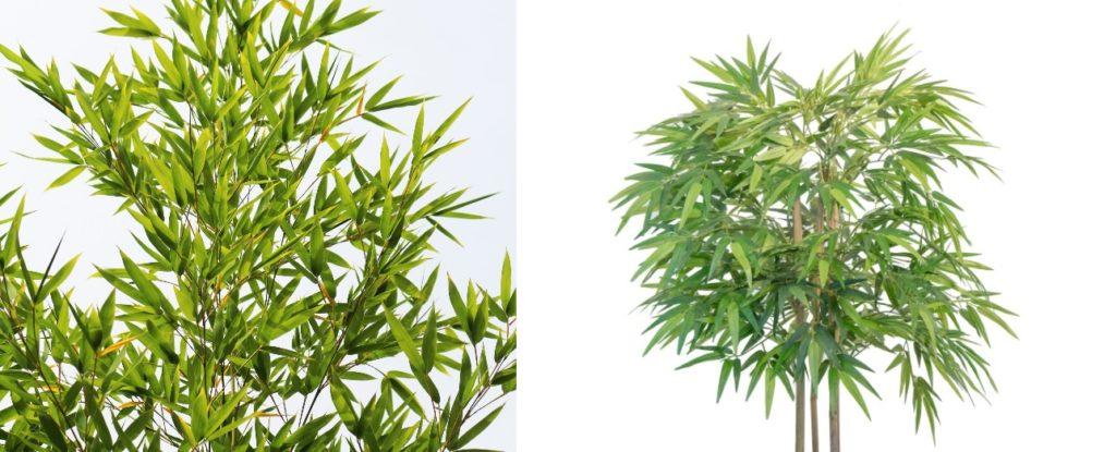 bambou faux