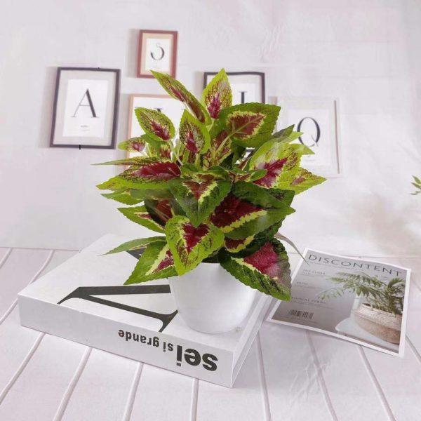 coleus artificiel