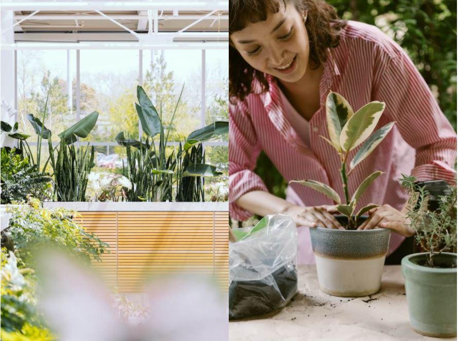 plantes artificielles pas cher